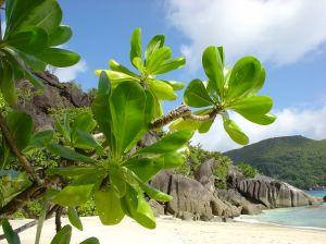 Exotické zájezdy německých CK do Asie, Afriky a Karibiku