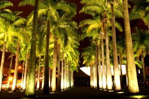 brazilie-palmy