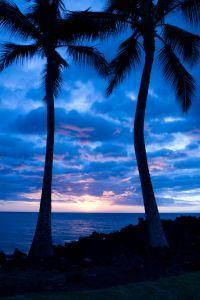havaj-palmy