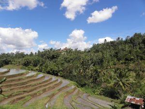 indonesie-pole