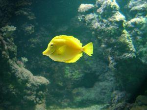 la-rochelle-akvarium