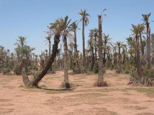 maroko-stromy