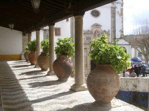 portugalsko-kvetinace